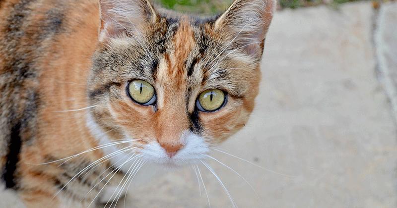 Adopting an Atlanta Cat